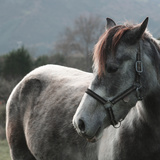 Horse Photographic Print by  saulgranda
