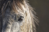 Grey Horse Photographic Print by Ryan Courson Photography