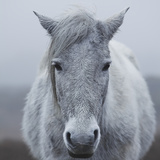 Misty Pony Photographic Print by David Baker