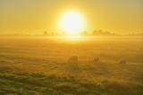 Meadow with Sheeps Photographic Print by Raimund Linke