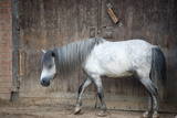 Horse Photographic Print by Alexey Bubryak