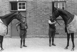 King's Horses Photographic Print by Bert Hardy