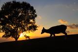 Sunset Photographic Print by Wako Megumi