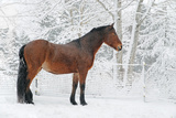 Horse in Snow Covered Setting Photographic Print by Anne Louise MacDonald