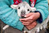Lamb Sitting on Shepherd-Girl's Lap, Pastoruri Park. Reproduction photographique par Uros Ravbar