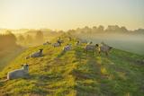 North Sea Dyke with Sheeps Photographic Print by Raimund Linke