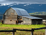Horse and Barn on Mormon Row, Grand Teton National Park, Wyoming, Usa, May 2008 Photographic Print by Bill Wight