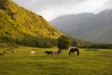 Horses in Field,Haena,Kauai,Hawaii Photographic Print by Marc Romanelli
