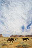 Horses (Equus Caballus) on Navajo Land, Monument Valley, Arizona Photographic Print by Enrique R Aguirre Aves