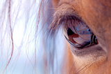Macro of Horse Eye Photographic Print by Anne Louise MacDonald
