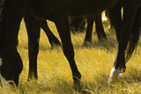 Horses Grazing Photographic Print by Donovan Reese