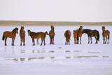 Salt and Horses Photographic Print by Elmar Akhmetov