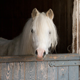 Pony Photographic Print by Peter Chadwick LRPS
