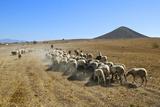 Arid Landscape in Cabo De Gata. Papier Photo par Gonzalo Azumendi