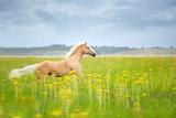 Horse Running in Field Fotografisk tryk