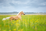Horse Running in Field Photographic Print