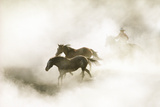 COWBOY ROUNDING UP HORSES IN MORNING FOG Photographic Print by Steve Bly