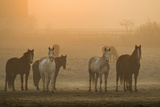 Farming Dawn Photographic Print by Insight Imaging