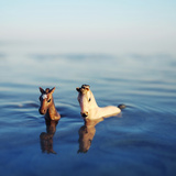 2 Toy Horses Swimming in the Sea Photographic Print by Fiona Crawford Watson