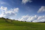Horse Paddock in Highlands Photographic Print by Sebastian Schneider