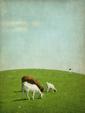 Goats on Hill Photographic Print by francois dion