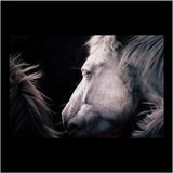 White Horse Photographic Print by MakiEni's photo