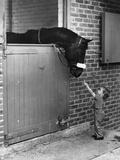 Horse and Child Reproduction photographique par Evening Standard