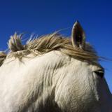 Mane of Horse Photographic Print by Bernard Jaubert