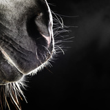 Horse Nose and Mouth Photographic Print by Henrik Sorensen