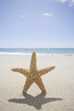 Usa, Massachusetts, Cape Cod, Nantucket, close up of Starfish on Sand Photographic Print by Chris Hackett