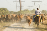 Cowboy Moving a Herd of Cattle Photographic Print by April Bauknight