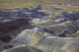 Petrified Forest National Park Photographic Print by Michele Falzone
