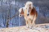 Two Horses on Snowy Hill in Winter Photographic Print by Driftless Studio