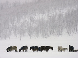 Horses and Aspen Trees on Hills in Snowstorm, Winter Photographic Print by David Epperson
