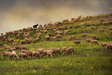 Grazing Sheep Photographic Print by Photography by Iñaki Gomez Marin