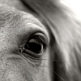 Eye of Horse Photographic Print by Gabriella Nonino