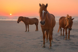 Assateague Island Wild Horses Photographic Print by Image by Michael Rickard