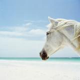 White Horse on Beach, Close-Up Fotografisk trykk av Nina Buesing