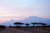 Sunrise View of Mount Kilimanjaro behind a Line of Acacia Trees. Amboseli National Park, Kenya Photographic Print by Cultura Travel/Philip Lee Harvey