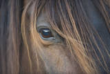 Close-Up of Crioulo Horse Looking at Camera Lámina fotográfica por Luis Veiga