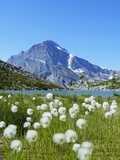 Cotton Grass and Monte Leone Photographic Print by Fabio Bianchi Photography