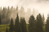 Fog and Fir Trees on Molas Pass, San Juan National Forest, Silverton, Colorado. Photographic Print by Kennan Harvey