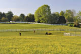 Farm in Spring Photographic Print by Aimin Tang