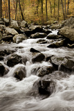 White Oak Canyon Photographic Print by Photography by Deb Snelson