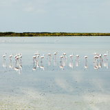 Flamingos Photographic Print by Roc Canals Photography