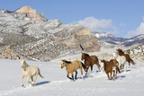 Usa, Wyoming, Shell, Wild Horses Galloping in Snow Covered Mountains Photographic Print by Daisy Gilardini
