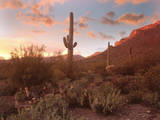 Arizona Desert Photographic Print by Images Etc Ltd