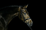 Purebred Bay Horse Ready for a Contest Photographic Print by Anja Hild