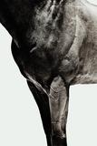 Horse Photographic Print by Yusuke Murata