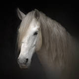 White Horse on Black Photographic Print by Christiana Stawski